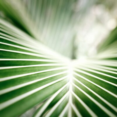palm, Palm Sunday, tradition, repetition, meaning, relationships, God, church
